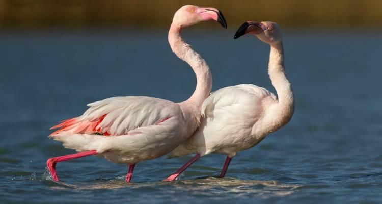 Θέλεις να συναντήσεις τα αληθινά ροζ φλαμίνγκο; Η Λήμνος σε περιμένει!