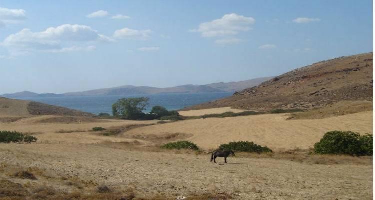 Αγριοκούνελα και αγροτική οικονομία Λήμνου | Συνεχίζει τις επαφές ο Εμπορικός Σύλλογος περιφέρειας Μούδρου